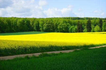 Podatek rolny - podstawowe informacje