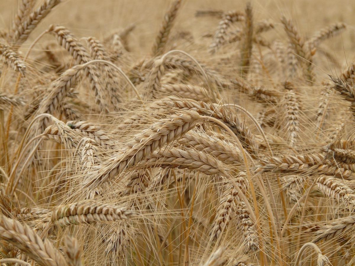 Podatek rolny - stawki podatkowe.