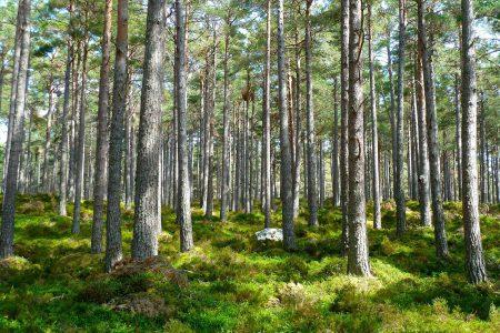 Podatek leśny - podstawowe informacje