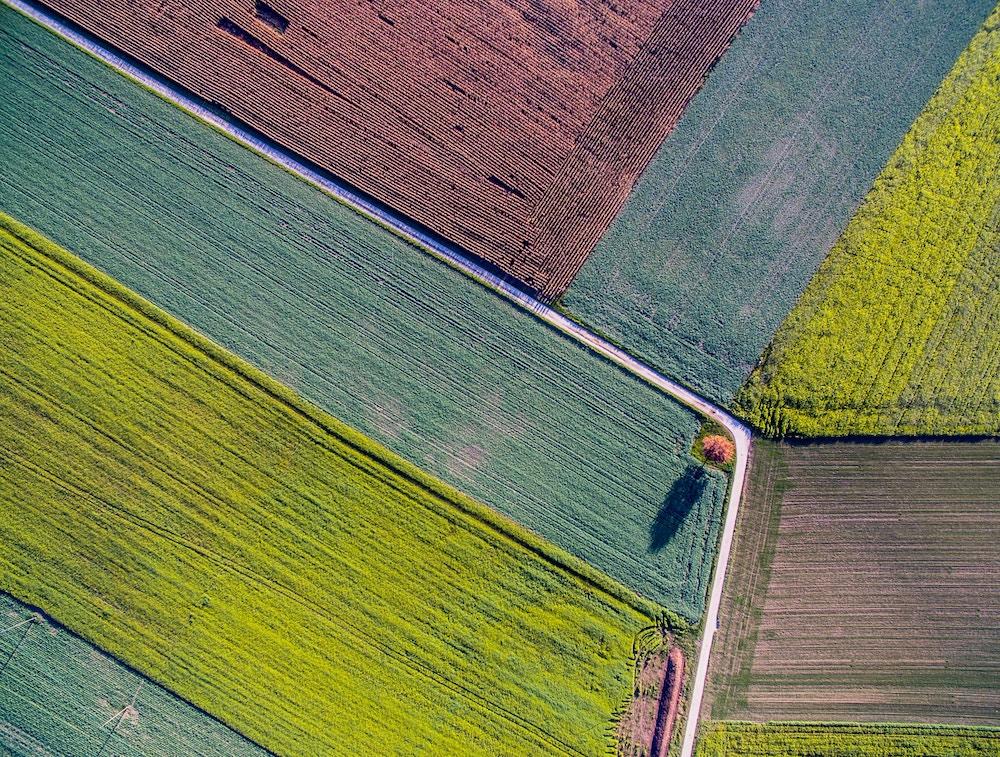 Podział nieruchomości - działki rolne